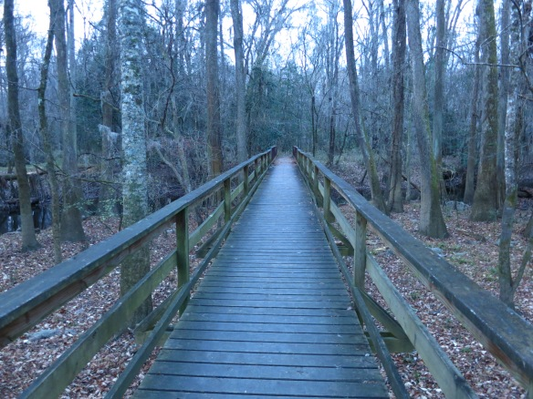 Congaree National Park, 20 minutes from our front door, Columbia SC